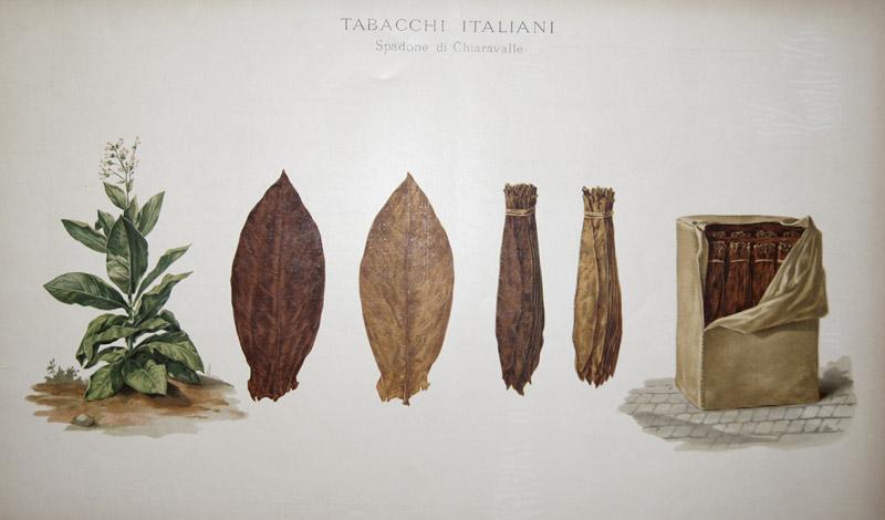 Salmone  Tabacchi Italiani. Spandone di Chiaravalle