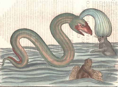 Anonymus  Ulyssis Aldouandi. Reuersus Indicus Anguilliformis.