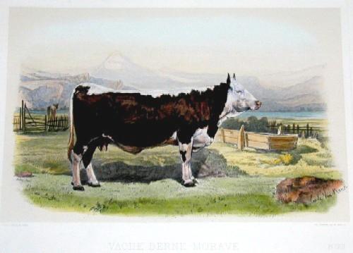 Lemercier / Levasseur  Vache Berne – Murave