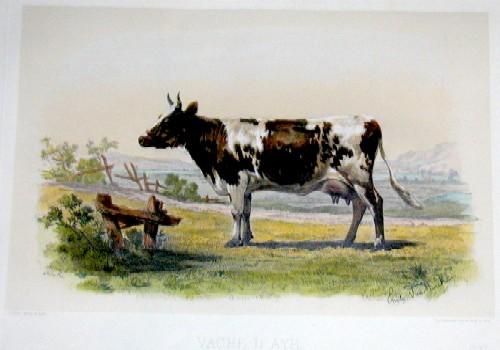 Lemercier / Levasseur  Vache d´Ayr