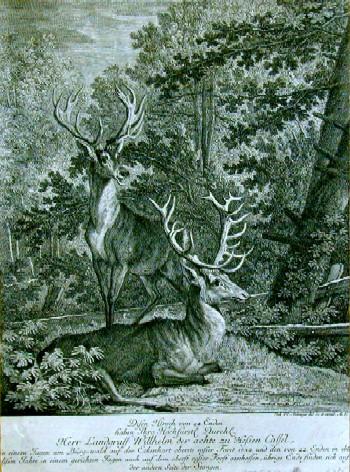Ridinger J. Disen Hirsch von 24. Enden haben Ihro Hochfürstl. Durchl. Der Landgraff Wilhellm der Achte zu Hessen Cassel……………geschossen