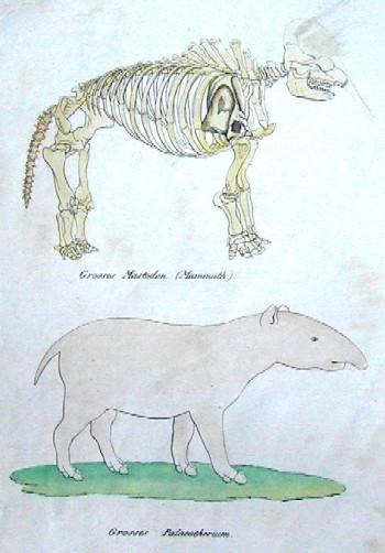 Brodtmann Karl Joseph Grosses Mastodon ( Mammuth) / Grosses Palaeotherium