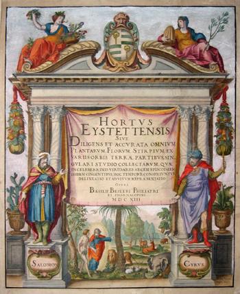 Besler Basilius Hotus Eystettensis sive Diligens et Accurata omnuim Plantarum Florum, Stirpium…..