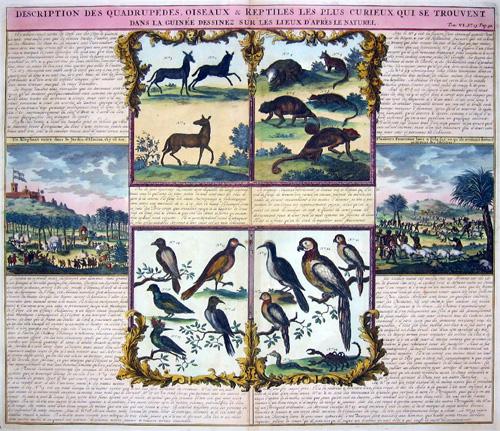 Chatelain  Description des Quadrupedes, oiseaux ou reptiles les plus cureaux qui ses trouvent dans la Guinee…..