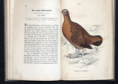 Jardine  Naturgeschihtliches Cabinet des Thierreiches/ Ornithologie des Federwildpret