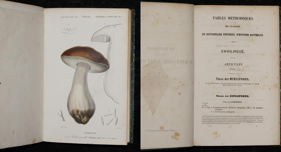 Martinet L. Dictionnaire universel d'Histoire Naturelle. Tome 3. 16 Atlas Crustacés, Mollusques et Botanique