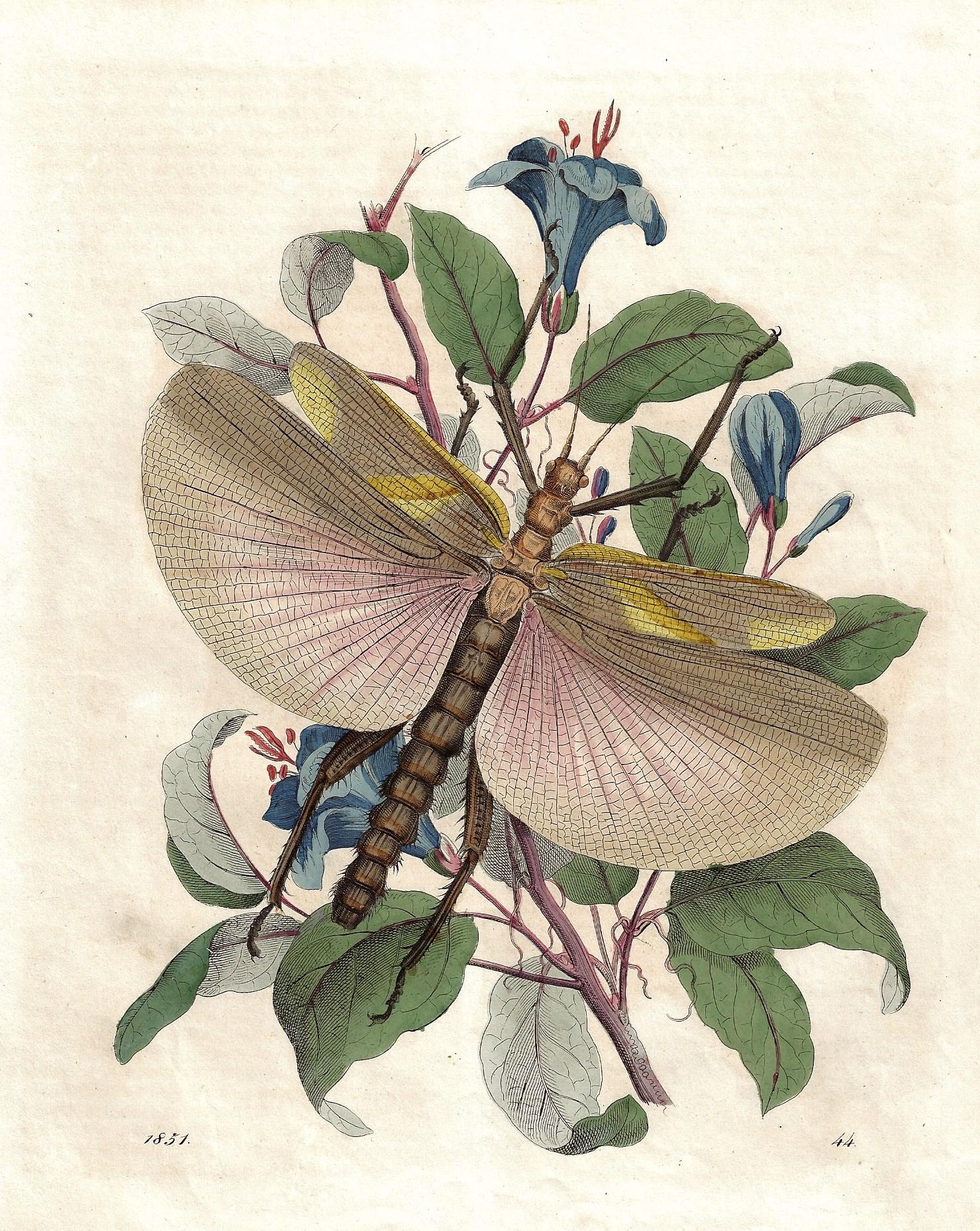 Anonymus  1851. 44.