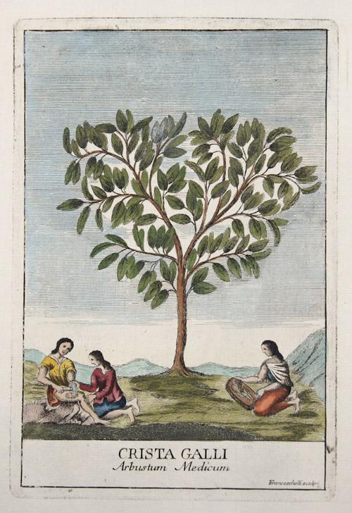 Franceschelli  Crista Galli. Arbustum medicum