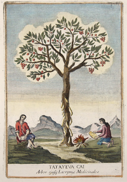 Franceschelli  Tatayeva Cai. Arbor ejusq;(Arbustum Medicum)