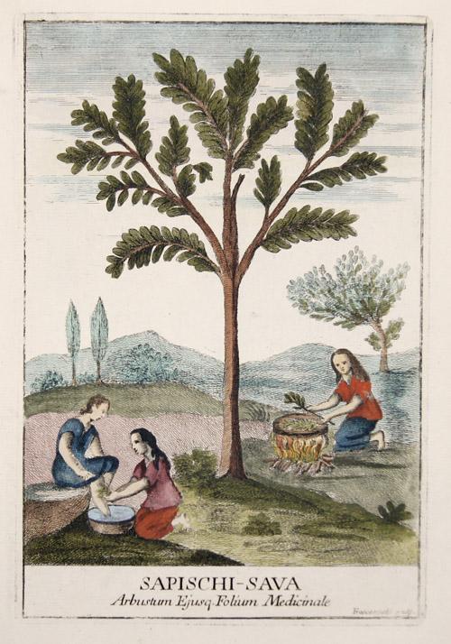 Franceschelli  Sapischi-Sava. Arbustum Ejusq. Folium Medicinale.