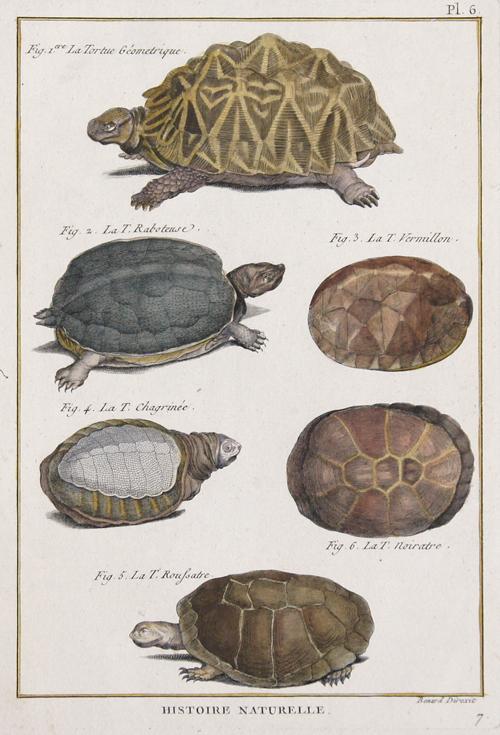 Benard/Martinet R. Histoire Naturelle. Fig.1. La Torue Gémetrique. Fig.2. La T.Raboteuse. Fig.3. La T.Vermillon. Fig.4. La T.Chagrinée. La T.Roussatre