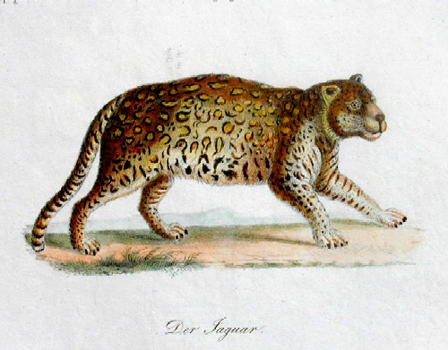 Brodtmann Karl Joseph Der Jaguar