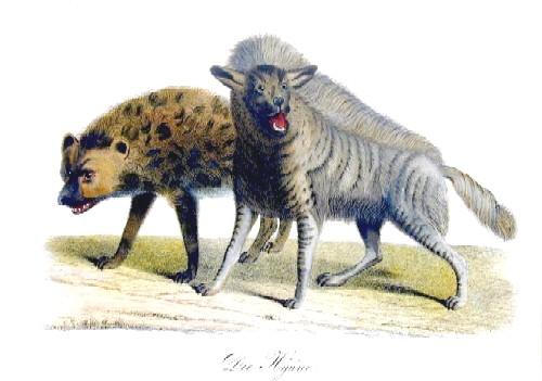 Brodtmann Karl Joseph Die Hyänen