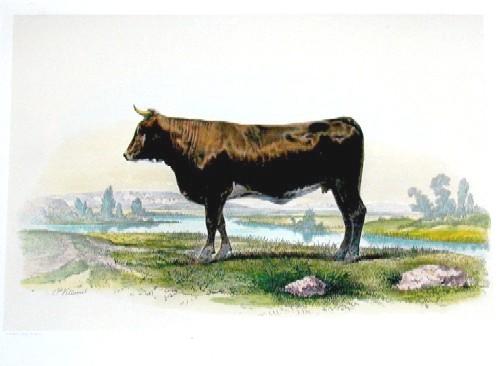 Lemercier / Levasseur  Vache comptoise