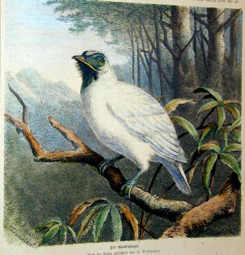 Beckmann  Der Glockenvogel