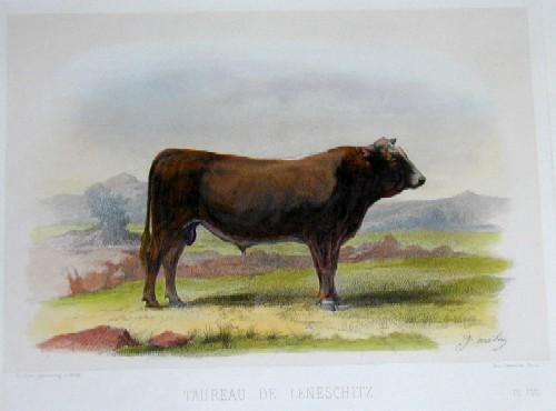 Lemercier / Levasseur  Taureau de Leneschitz
