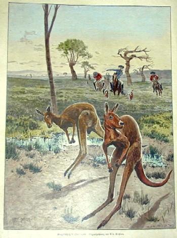 Richter  Känguru Hatz in Queensland