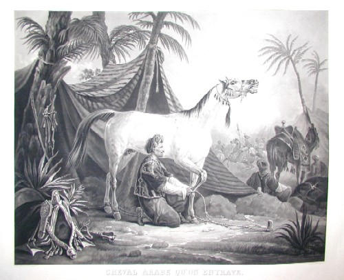 Vernet Antoine Charles Horace ( Carl) Cheval Arabe qu on entrabe