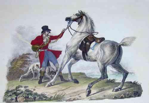 Anonymus  Englisches Jagdpgferd