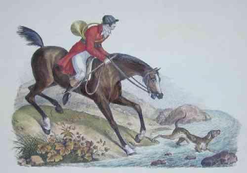Anonymus  Englisches Jagdpferd