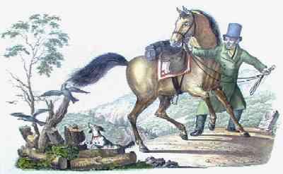 Anonymus  Schweizer Pferd