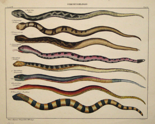 Löffler C. Schienenschlangen