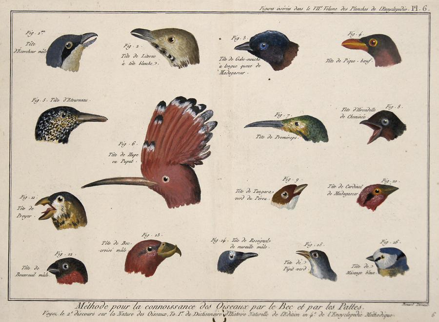 Berard de  Méthode pour la connoisance des Oiseaux par le Bec et par les Pattes…/ Figures insérés dans le VII Volume des Planches de l´Encyclopédie