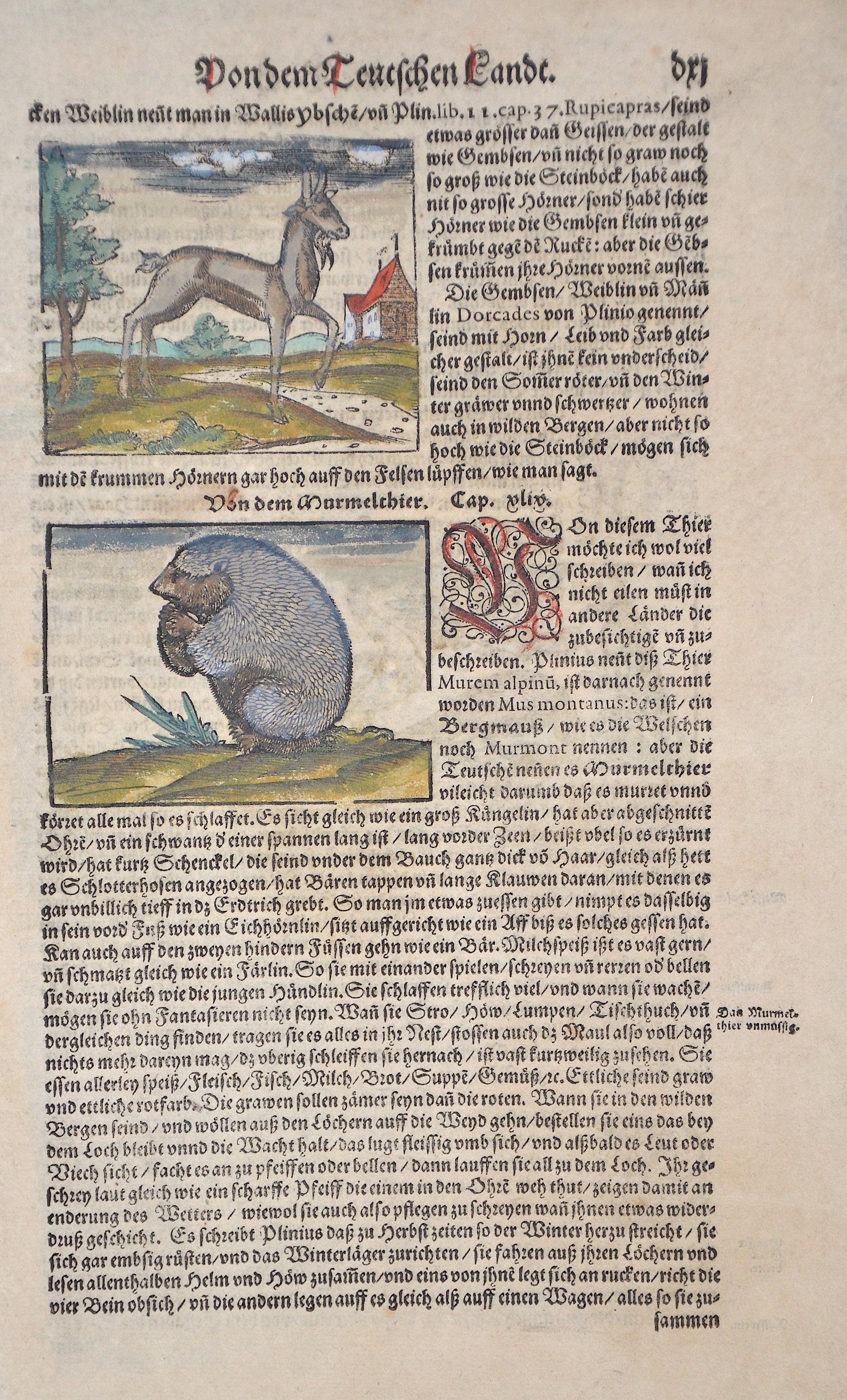 Münster Sebastian Von dem Teutschen Landt. Von dem Murmelthier.