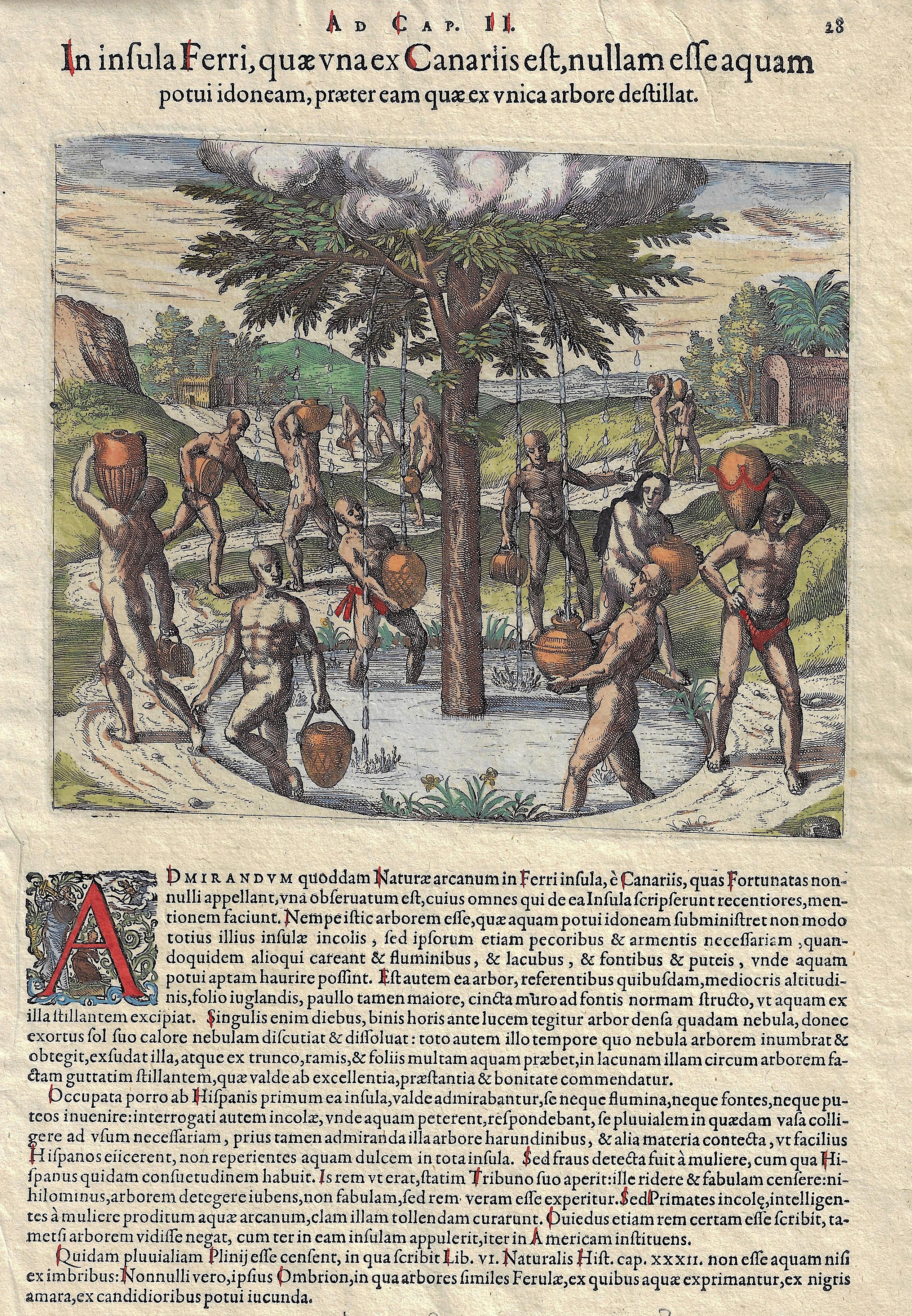 Bry, de  In insula Ferri, quae una ex Canariis est, nullam esse aquam potui idoneam, praeter eam quae ex unica arbore destillat.
