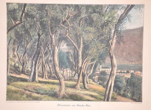 Bong  Olivenhain am Garda-See.