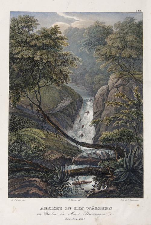 Brodtmann Karl Joseph Ansicht in den Wäldern im Becken der Meeres-Strömungen. (Neu-Seeland)